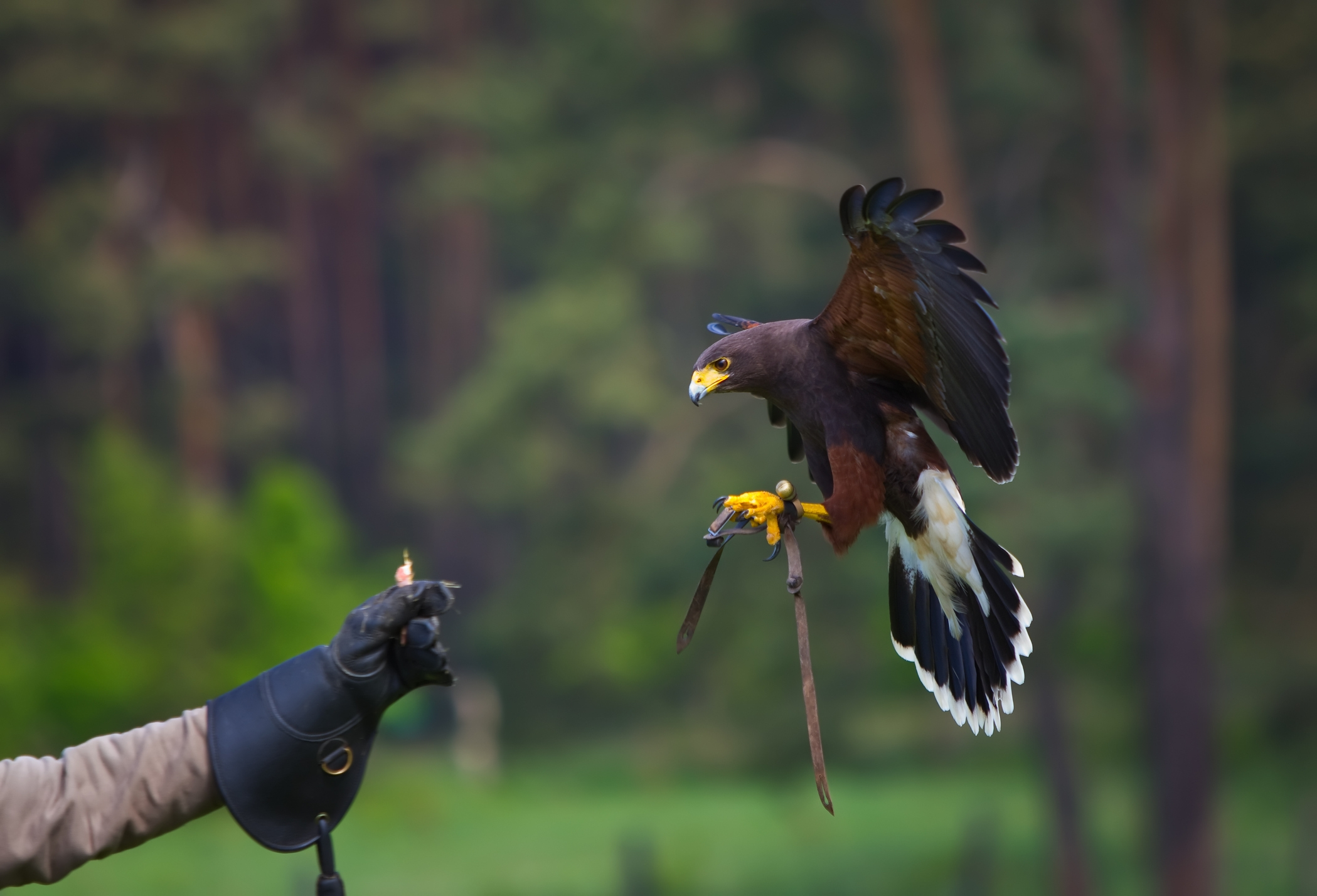 Best Falconry Training center In USA